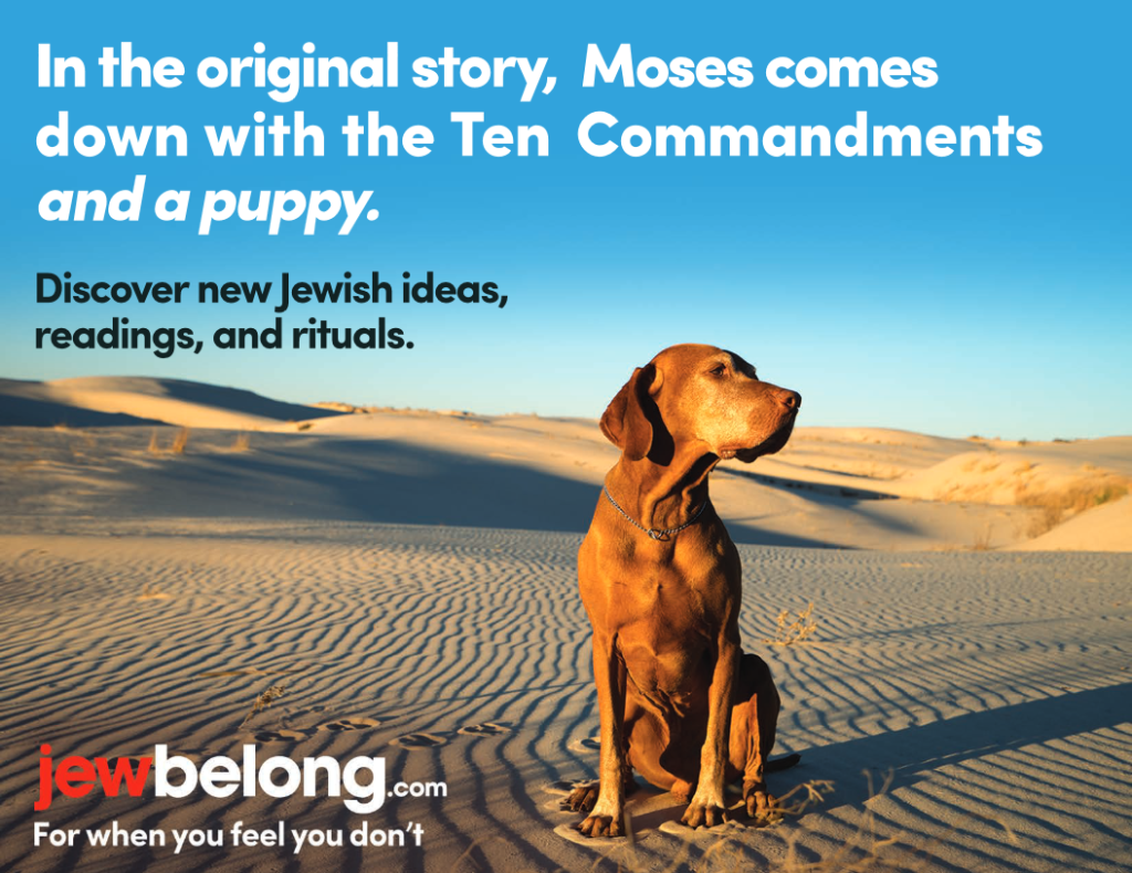 jewbelong_puppy